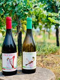 coddretto wines
